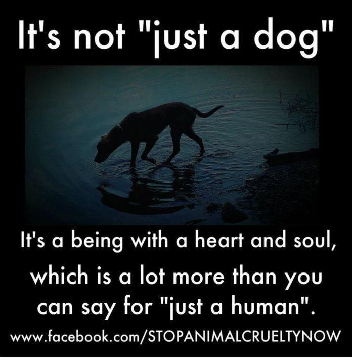 true this i cannot stand to see or watch anything that has even the remotest relationship to animal abuse.