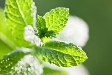 mint and natural solutions make the best solutions. Keep bugs away without harsh chemicals and with a pleasant scent.