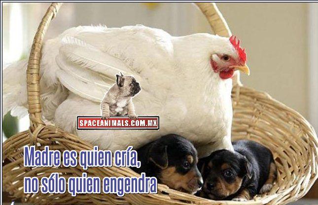 Madre es quien cria no solo quien engendra