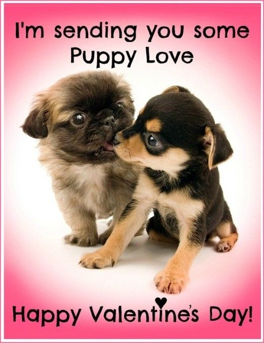 44 best valentines day cards images on pinterest - Valentines day pictures with puppies ...