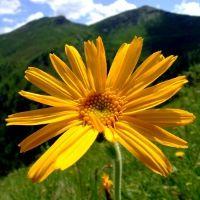 Les plantes pour soulager vos douleurs sciatiques