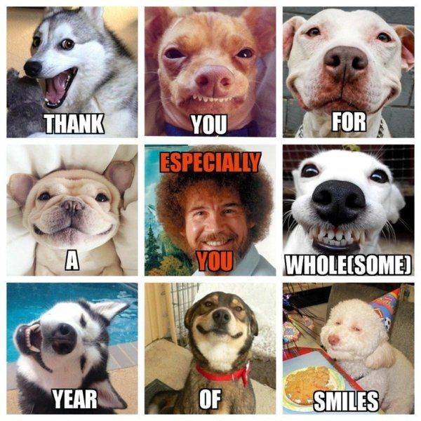 30 Wholesome Memes To Cheer You Up Wholesome Memes Funny Memes Happy 1st Birthdays
