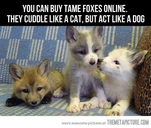 I want one!  I'm getting a fox…