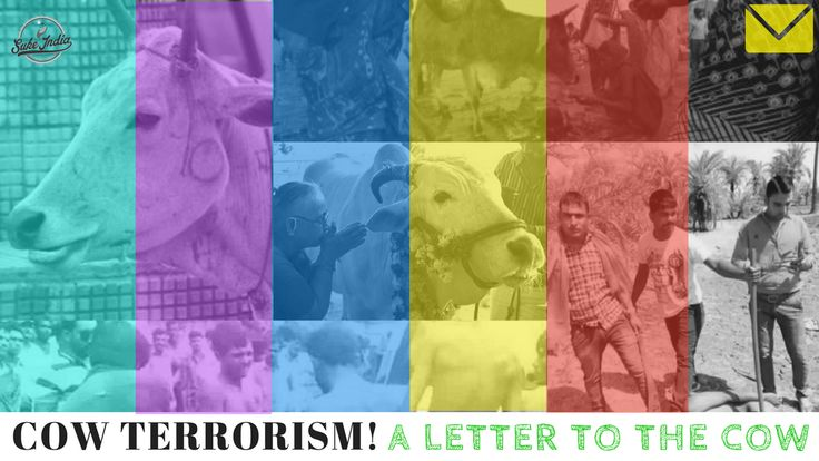 Dear Cow, Gau rakshaks, too busy lynching and killing people, wouldn't care. So writing to you. Tell me about cow terrorism. Or here, let me tell it to you!