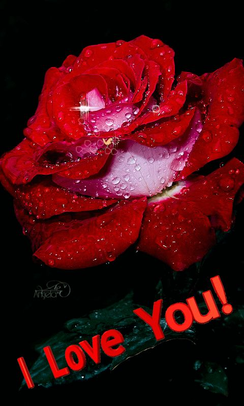 Download Animated 480x800 «Rose» Cell Phone Wallpaper ...