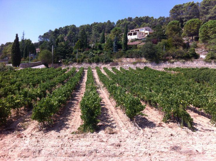 Cotignac, France, vineyard, Provence