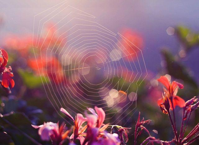 kto rano wstaje, ten robi zdjęcia w ładnym świetle :)bardzo polubiłam ostanio robić takie zdjęcia :)