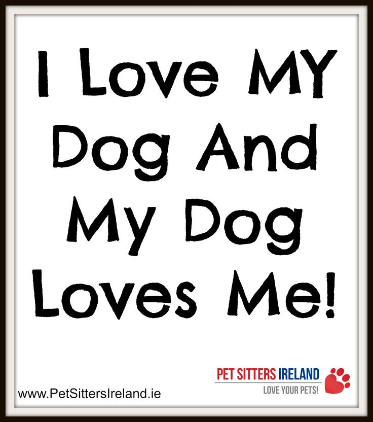 My Dog Loves Me Quotes: 11 Best Inspirational Quotes From Pet Sitters Ireland