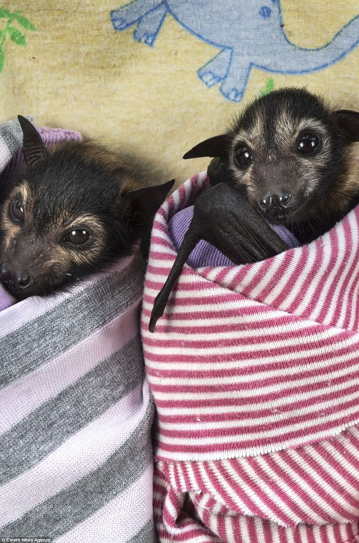 The furry critters can be seen swaddled in colourful blankets while they star innocently a...
