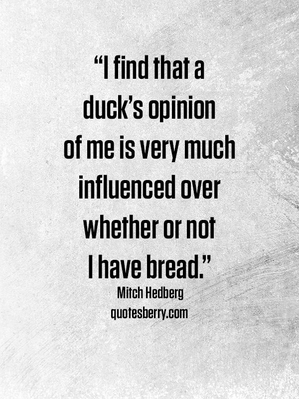 I find that a duck's opinion of me is very much influenced over whether or not I have bread. - Mitch Hedberg