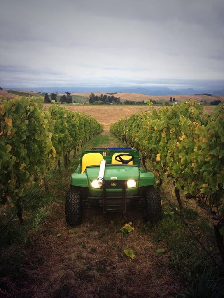 Auntsfield Estate Vineyard, Marlborough, NZ