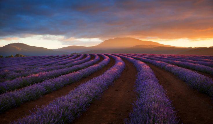 lavendel 10 10 Prachtige Fotos van Lavendelvelden