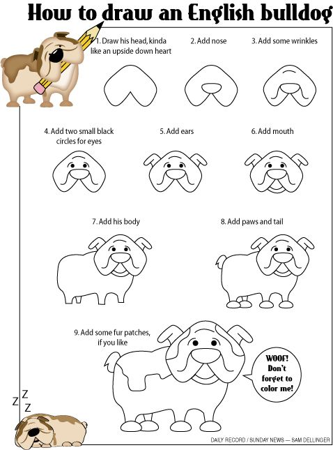 How-to draw an English bulldog. Yes, I actullay get paid to have #fun at my job at the York Daily Record/Sunday News. Most recently I made a step-by-step guide on how to draw a #cute #bulldog. This cartoon is based on my own bully named Diesel.