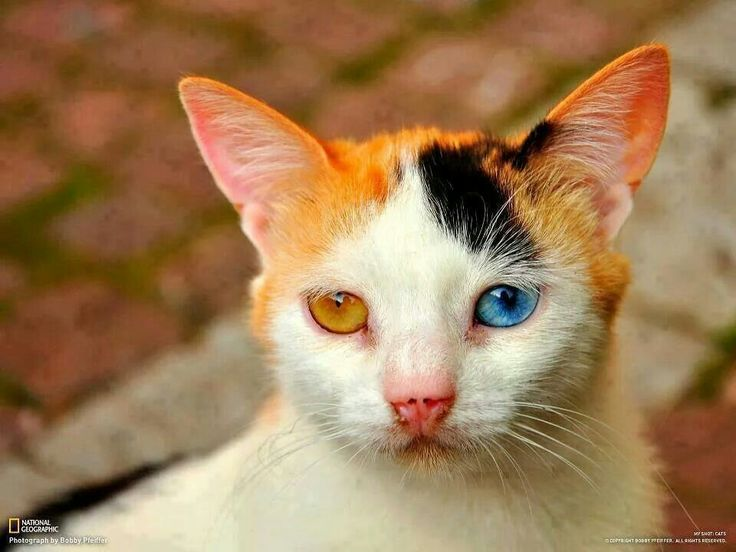 What a beautiful kitten. Those eyes just rock!