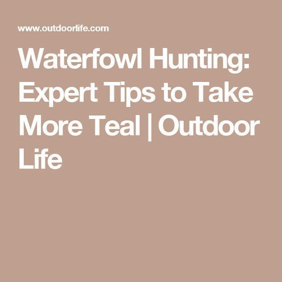 24 Best Duck Hunting Images On Pinterest Waterfowl