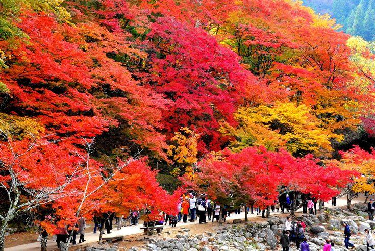 愛知県の紅葉の名所「香嵐渓」