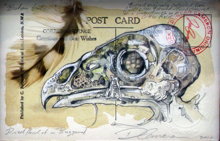 Natural History Postcard UK Artist Duncan Cameron  www.duncancameron.org
