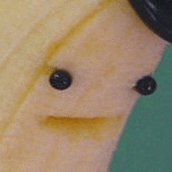 omg apparently artificial banana flavoring is based on the gros michel banana which was wiped out by a banana plague in the 50s and the banana we eat today is a totally different thing called the cavendish and thats why banana candy doesnt taste like bananas do you know how lied to i feel. like there was a fucking banana apocalypse and no one told me about it until now. We are eating the shadowy remnants of a dead species.