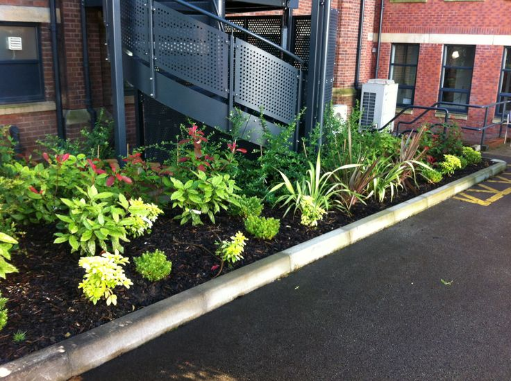 Planting at ASHTON sixth form college by roger Saunders