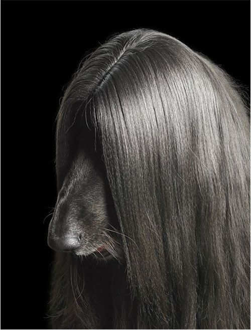 Tim Flach  Posted on 07.14.10 by Jaime in For Humans. Tim Flach takes portraits of animals, many of which are dogs. His expressive portraits are much like human portraits rather than snaps of dogs in their natural habitats.