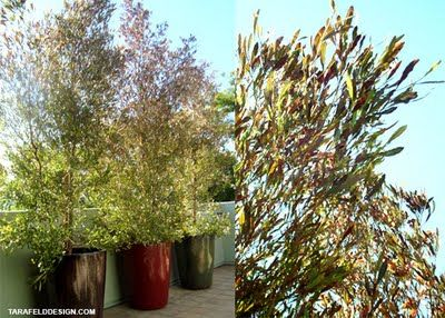 My L.A. Lifestyle: Modern Moroccan Patio Landscaping
