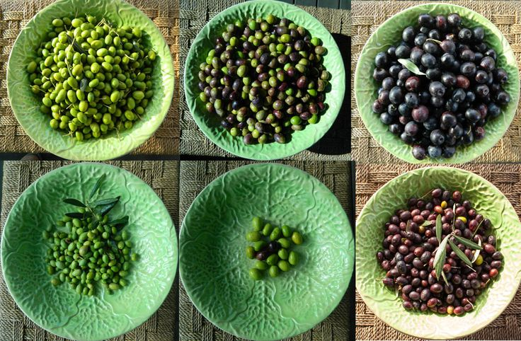 Learn how to make olive oil at home. How to grow them, press them and pickle them.