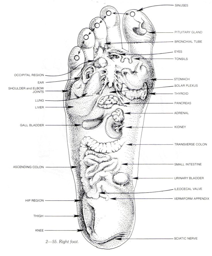 20 Best Foot Diagrams Images On Pinterest Acupressure