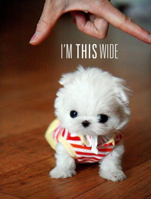 oh my goodness. too cute.