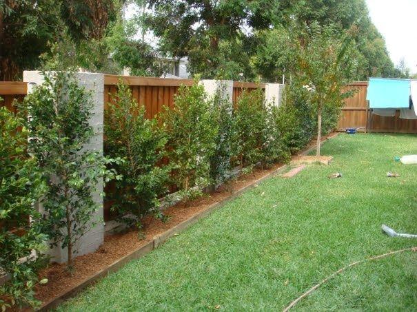garden ideas along fence line