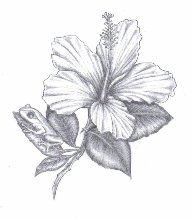 стоцкая гибискус цветок рисунок графика сделать