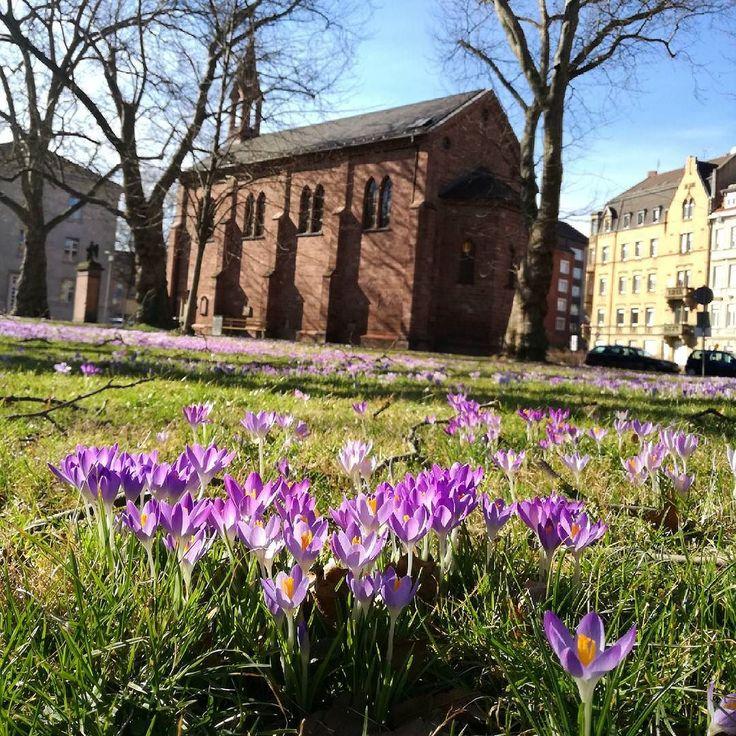 Bei einem kleinen #Spaziergang durch die #Oststadt haben wir den #Frühling gefunden!  So schönes #Wetter heute genießt den Tag!  #visitkarlsruhe #karlsruhe #visitbawu #meinbw #unendlichregion #sunnyday #springiscoming #explorekarlsruhe #explorethecity #Sonnenschein #sunshine #citylife #blumenmeer #krokusse #church #kirche #kapelle #building #bluesky #beautifulweather #travel #saturday #weekend