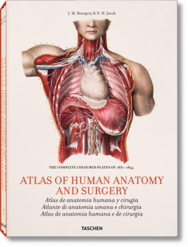 Atlas de la anatomía humana y cirugía: una selección.     Bourgery, J. M.  http://mezquita.uco.es/record=b1419064~S6*spi
