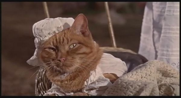 thomasina cats in movies (With images) Non animated