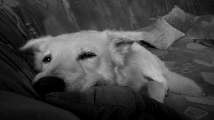 Sleepy Xavi