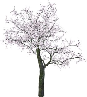 Png's de árboles para fotomontajes