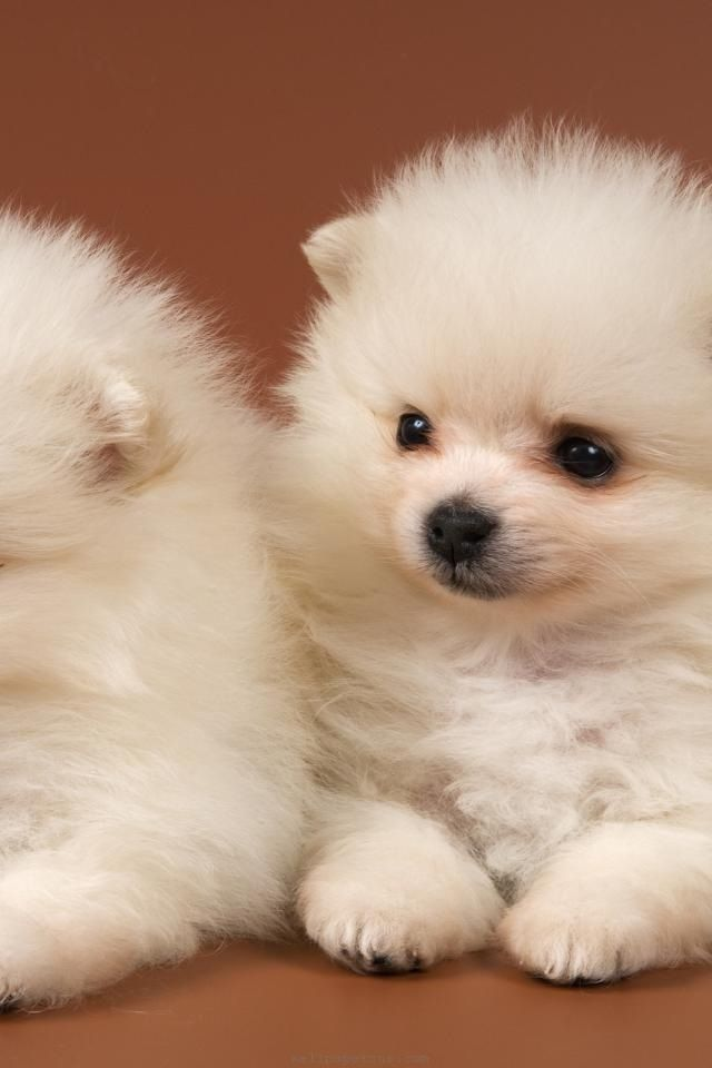 14 Best Non Shedding Adorable Dogs Images On Pinterest