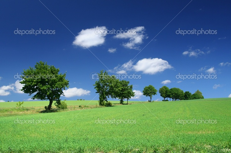 tree line landscape - Google Search