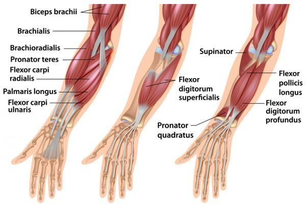 7 Exercises to Maximize Hand, Wrist, and Forearm Strength | Breaking Muscle