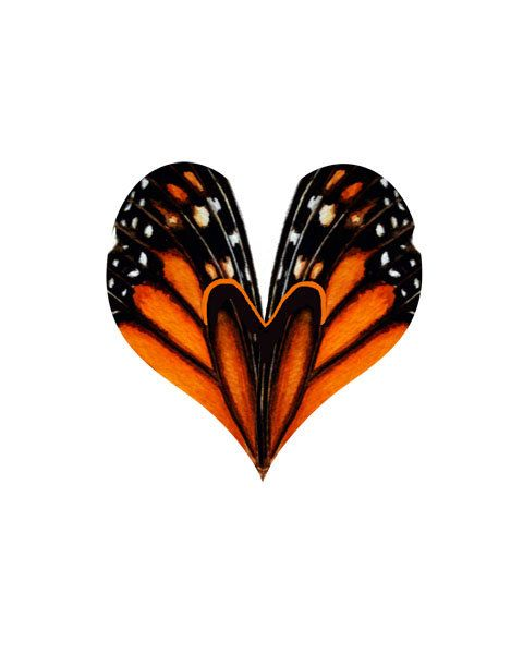 *A different take on the monarch butterfly tattoo. I like this, purple for my mom. N blue for DAD!,