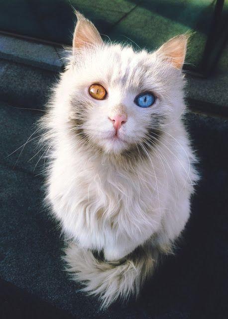 un petit chat avec de yeux coloré