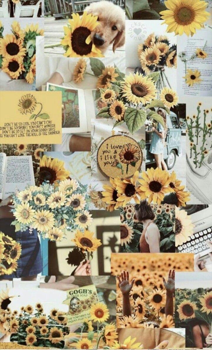 pin by nijah jonae on wallpaper sunflower wallpaper