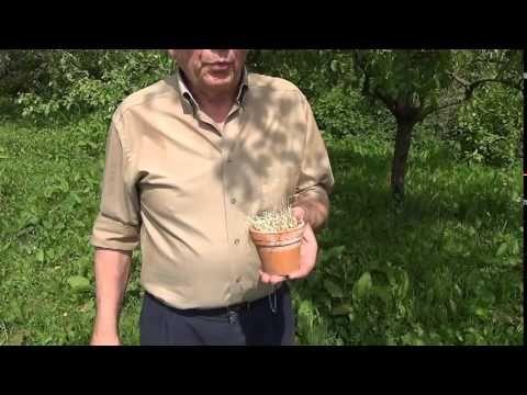 Oorwormen in potjes