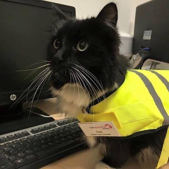 Funcionária do ano! http://bit.ly/1onJlHr #animais #gatos