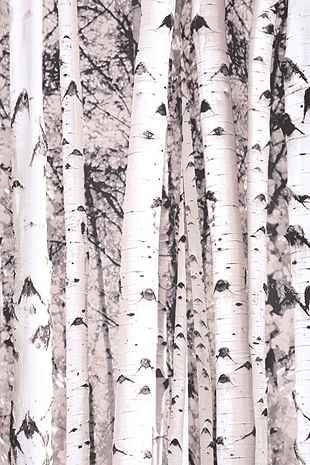Birch Tree Shower Curtain - Urban Outfitters - stretch on a wooden frame for large scale wall art <3
