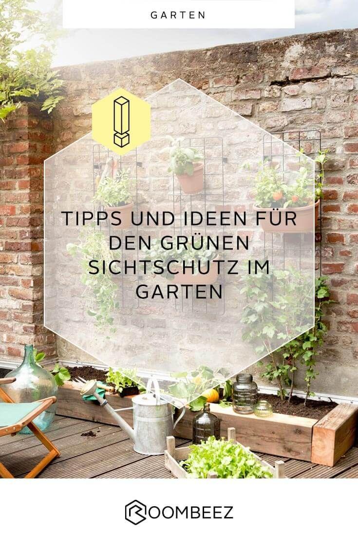 Sichtschutz Mit Pflanzen Balkon Terrasse Garten Pflanzen