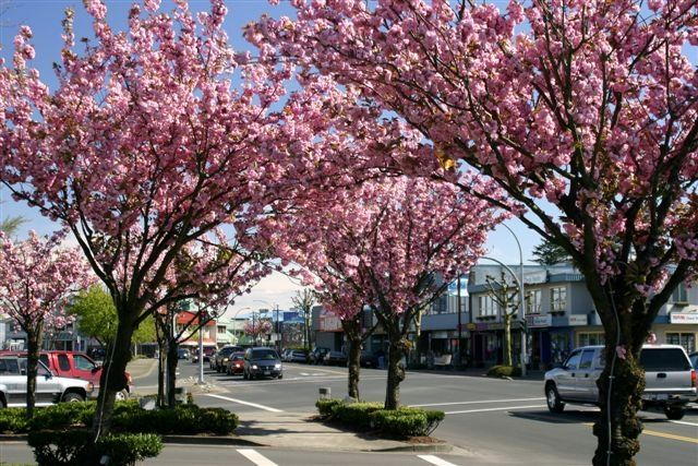 Downtown Campbell River, Strathcona, Vancouver Island, BC