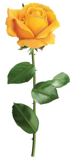 Yellow Rose Transparent PNG Clip Art Image