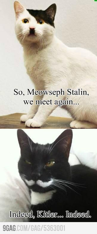 We meet again.: Meowseph Stalin, Funny Pictures, Funny Cat, Cat Humor, Too Funny, Funny Stuff, So Funny, Black Cat, Animal