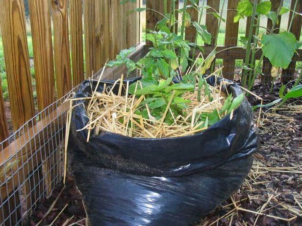 You can grow potatoes in a bagDiy Gardens, Gardens Ideas, Plastic Bags, Vegetables Gardens, Trash Bags, Growing Potatoes, Garbage Bags, Gardens Enterpri, Grow Potatoes