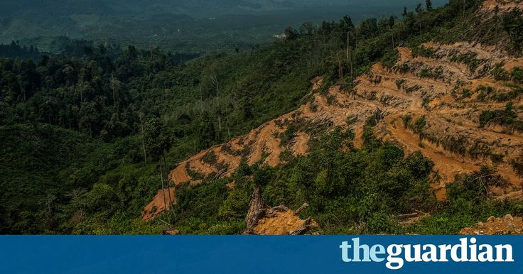 Pepsico, Unilever and Nestlé accused of complicity in illegal rainforest destruction #environment #news